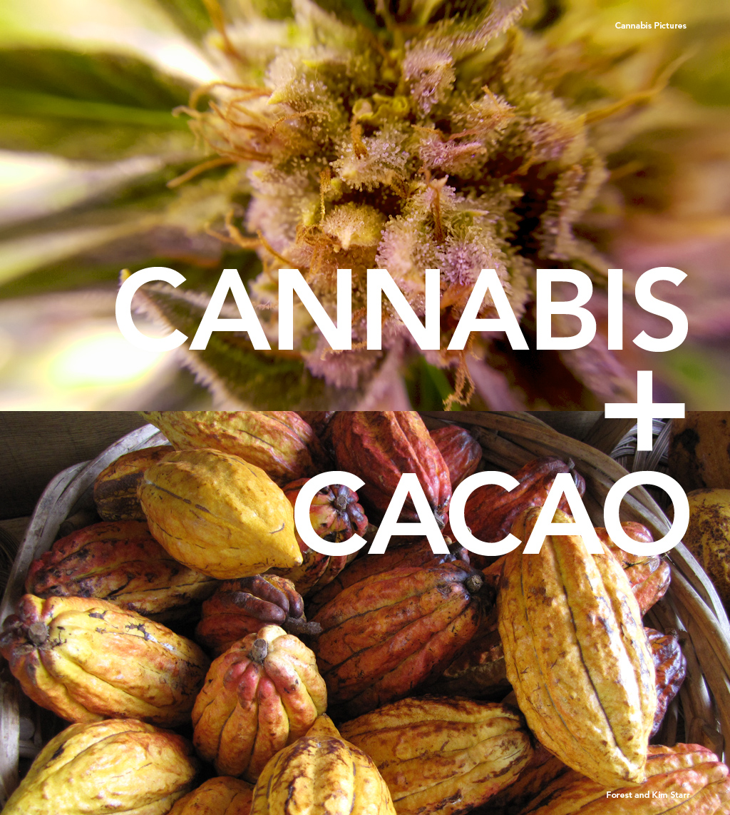 Curious is cannabis and cacao
